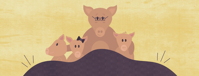 a family of pigs under a weighted blanket